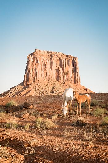 Wildcat-trail-horses