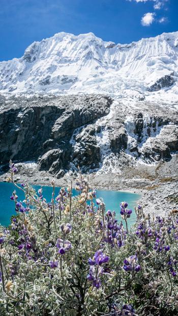 Peru Huaraz Laguna 69 bloemen